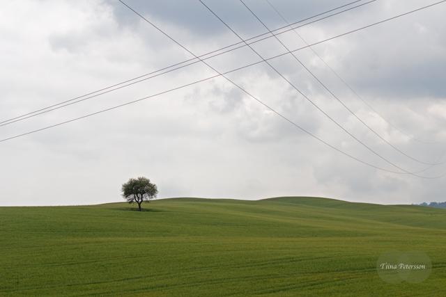 Tuscany_7703