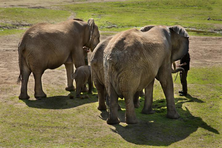 Boras djurpark 24