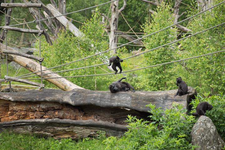 Boras djurpark 25