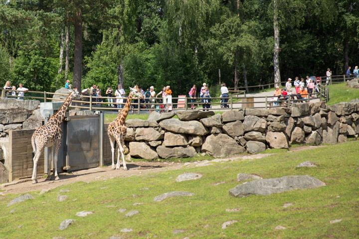 Boras djurpark 26