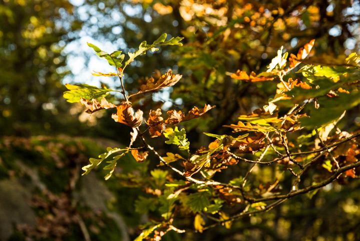 Tiina Petersson Autumn-3