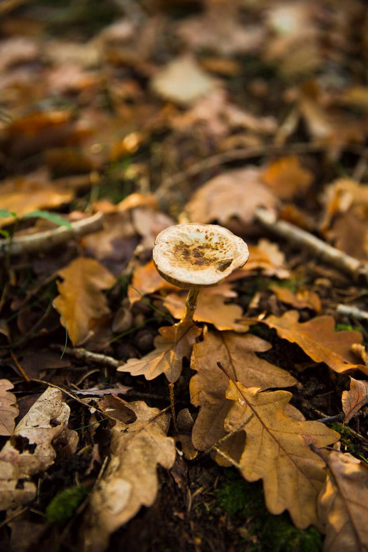 Tiina Petersson Autumn 4