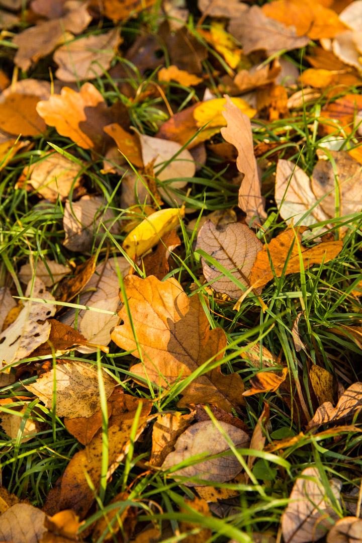 Tiina Petersson Autumn-5