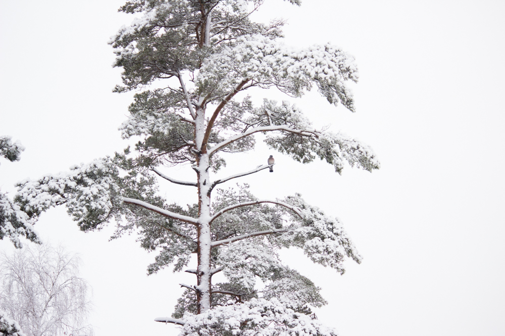 Tiina Petersson – Winter-2